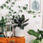 A Nod To Nature: Biophilic Interior Design